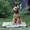 OSSO Охлаждающий коврик для собак OSSO Fashion 50*70 см