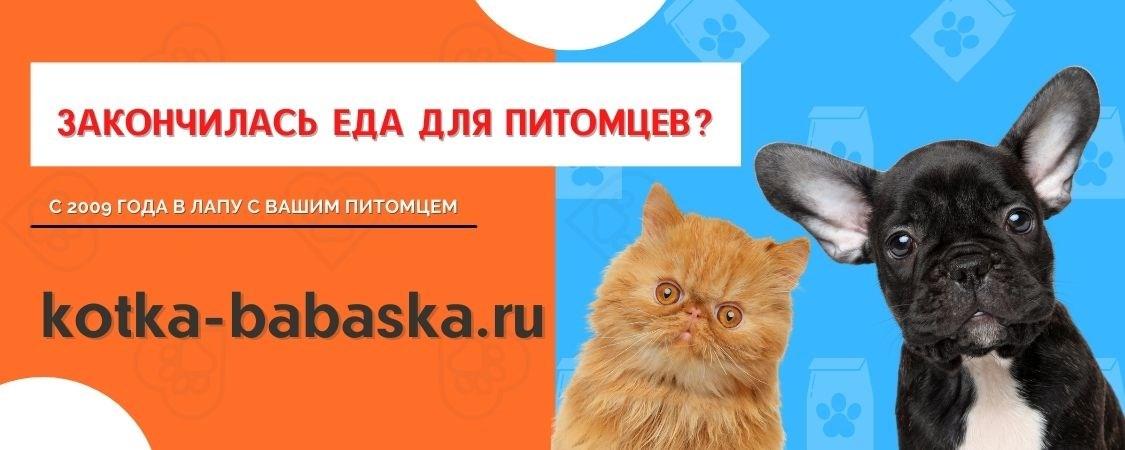 image banner kotka-babaska.ru