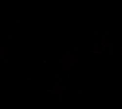Rogz Snake Разъемная шлейка 20 мм черная