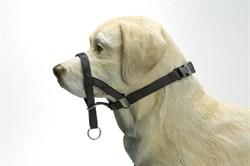 Пет Люкс Недоуздок для собак р-р 3 (45-60 см)
